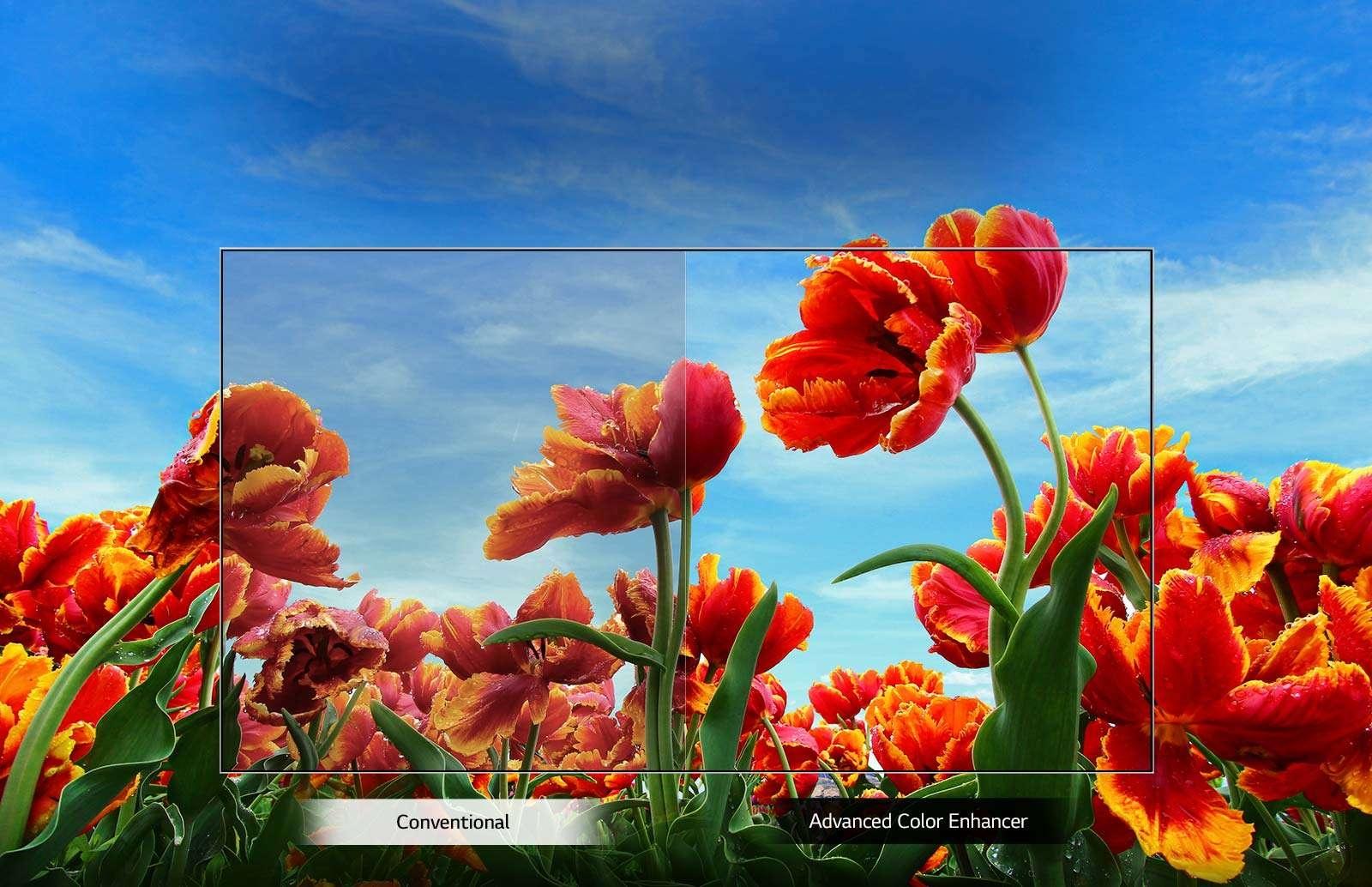 TV-FHD-43-LM55-02-Dynamic-Color-Desktop